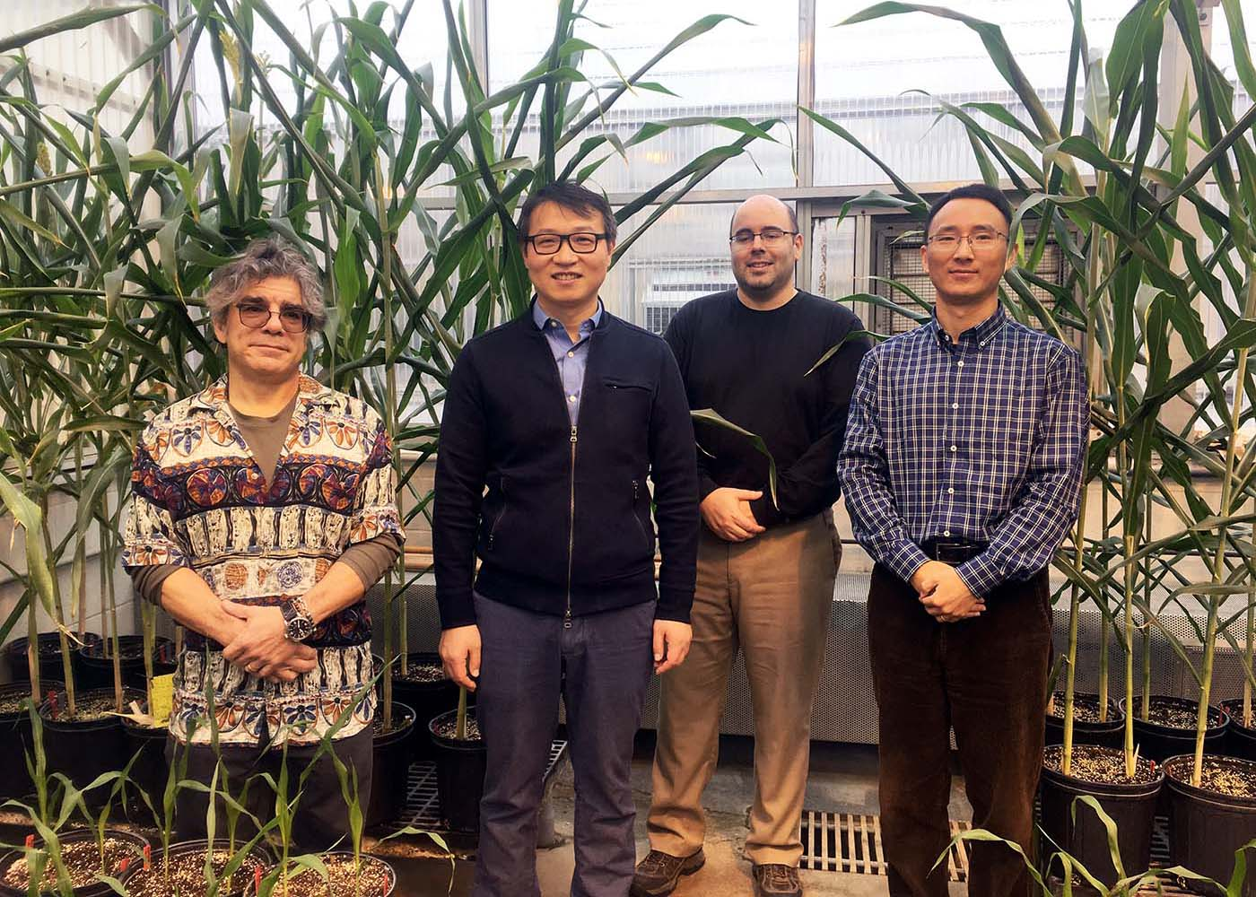 UNL's Tom Clemente, Jinliang Yang, James Schnable and Yufeng Ge collaborate on new NSF-funded plant science research